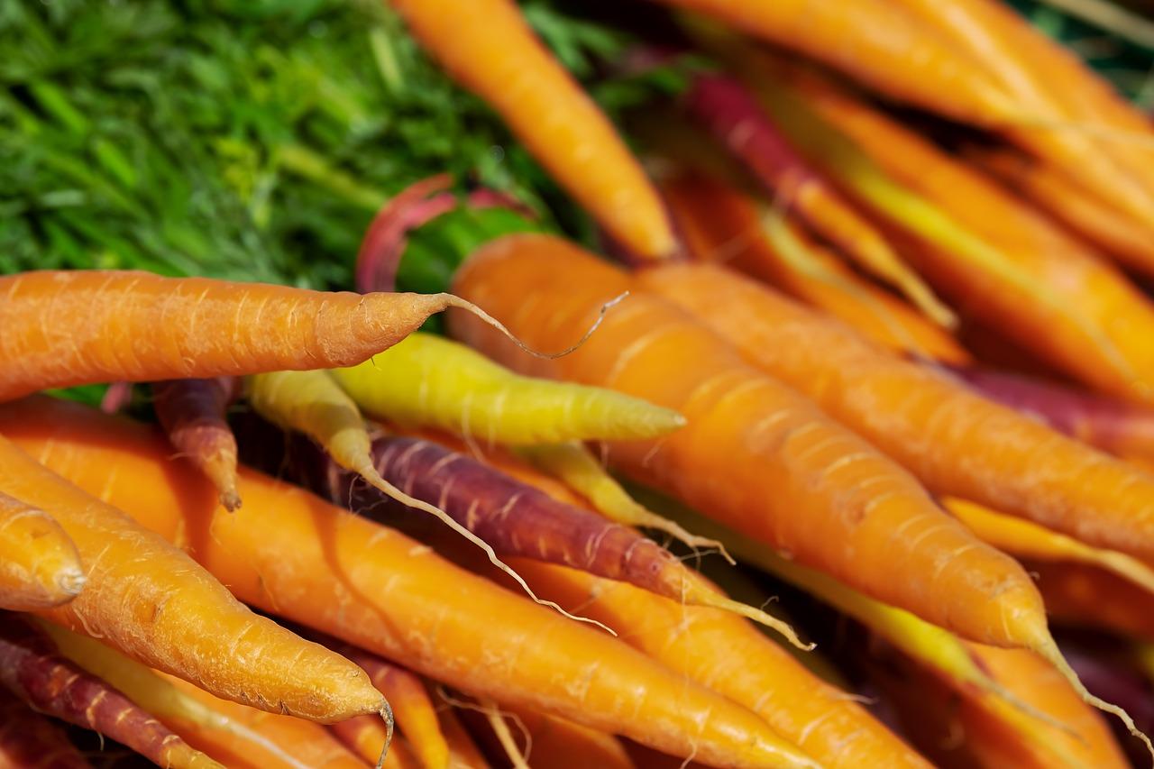La Zanahoria Origen Caracteristicas Cultivo Y Mucho Mas Probablemente el origen de la zanahoria proviene de irán y afganistán, siendo utilizado el cultivo de la zanahoria como una planta aromática y para utilizar sus semillas, posteriormente surgió el cultivo de. la zanahoria origen caracteristicas